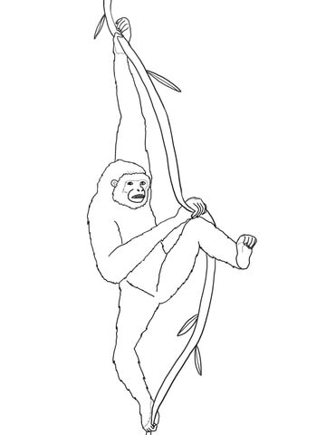Hanging Gibbon coloring page