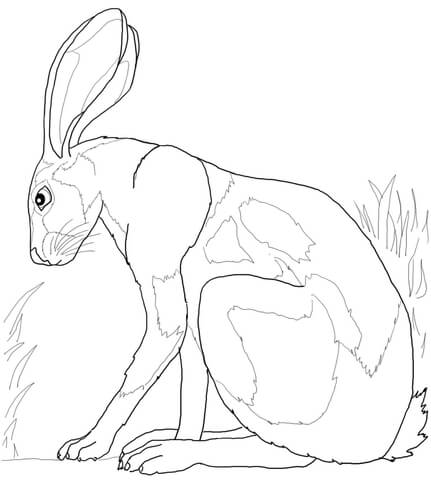 Desert Hare coloring page