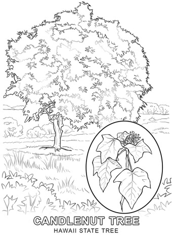 hawaii state tree coloring page - Hawaiian Coloring Pages