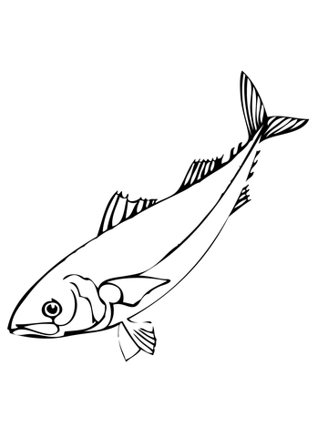Herring Fish coloring page