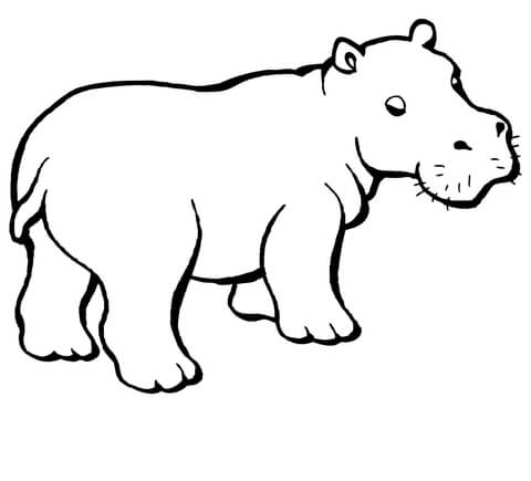 Baby Hippo coloring page