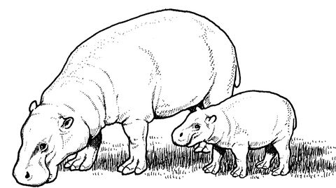 Pygmy Hippopotamus Mother with Baby coloring page