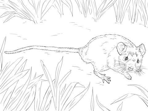 desert mouse coloring page house mouse coloring page
