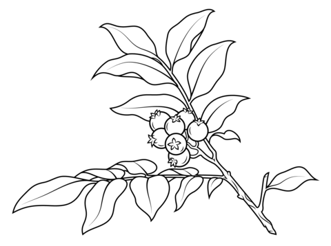 Huckleberry branch coloring page