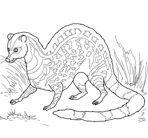 Indian Civet coloring page