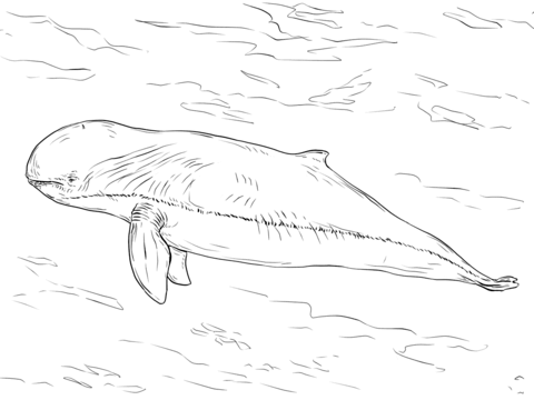 Irrawaddy Dolphin Coloring Page