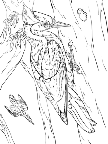 Two Woodpeckers Coloring Page Free Printable Coloring Pages