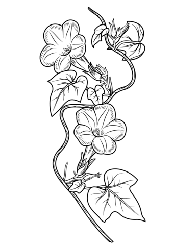 Ivy-leaf Morning Glory coloring page