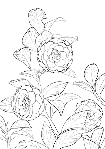 Japanese Camellia coloring page