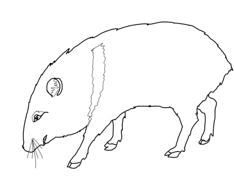 javelina coloring page