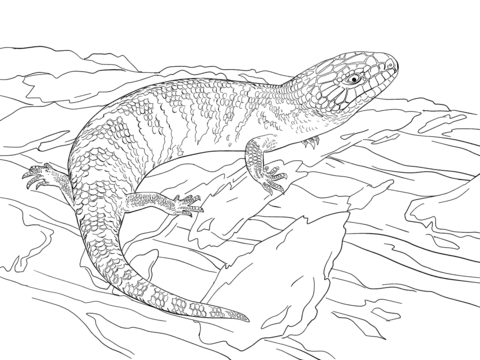 Juvenile Eastern Blue Tongued Skink Coloring page