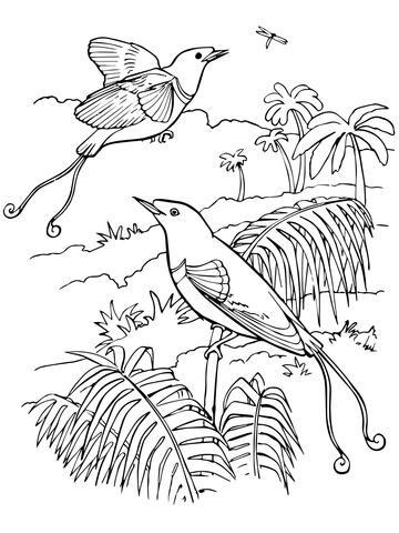 King Bird-of-Paradise coloring page