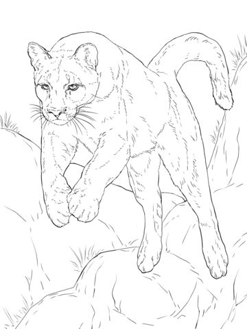 Leaping Cougar coloring page