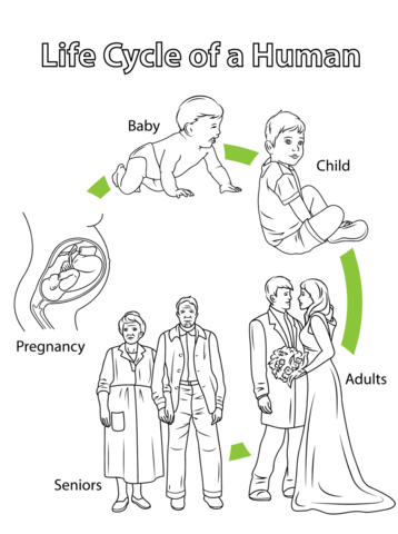 Life Cycle of a Human coloring page