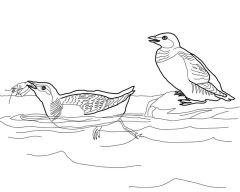 Little Auk coloring page