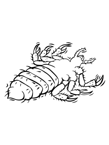 Louse Parasite coloring page