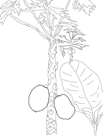 Mango Tree coloring page
