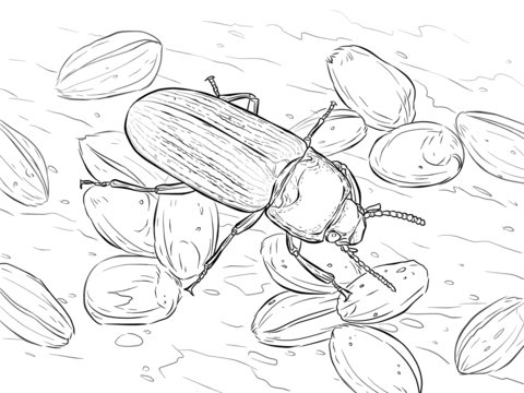 Mealworm Beetle coloring page
