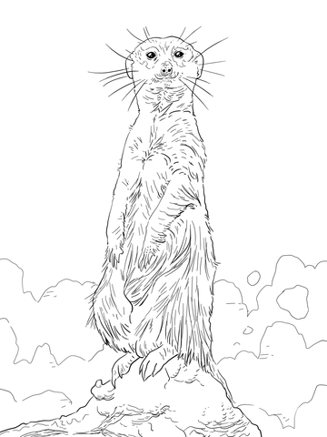 meerkat standing upright coloring page