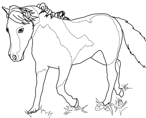 grazzing mare horse and filly coloring page free