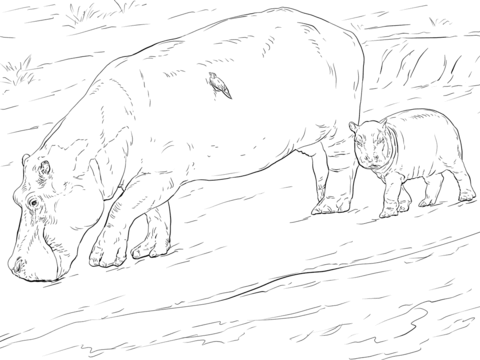 Mother And Young Hippo coloring page