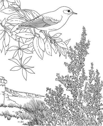 Nevada Mountain Bluebird and Sagebrush coloring page