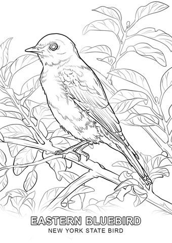 new york state bird coloring page