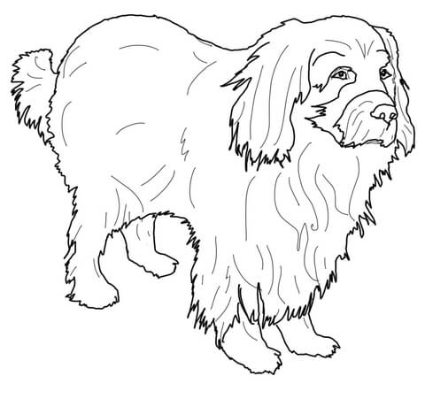 Newfoundland coloring page