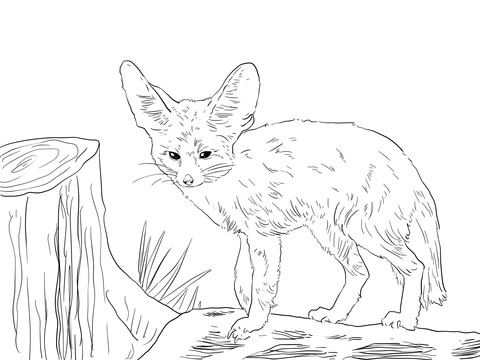 North African Fennec Fox coloring page