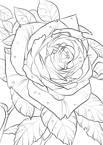 Oklahoma Rose coloring page
