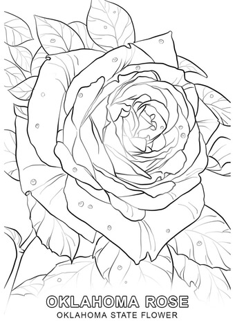 Oklahoma State Flower coloring page - Free Printable Coloring Pages