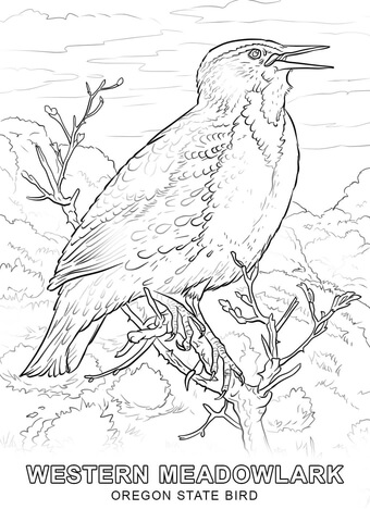 Flag of Oregon coloring page - Free Printable Coloring Pages