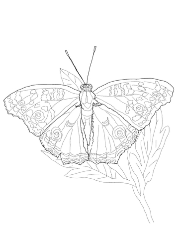 Owl Butterfly coloring page
