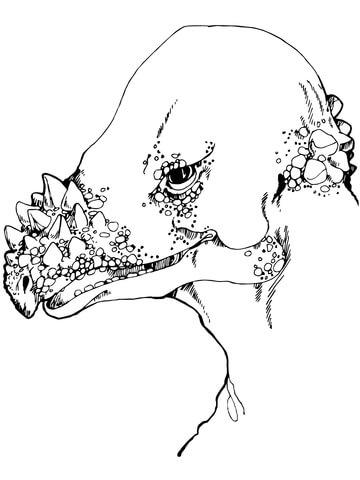 pachycephalosaurus dinosaur coloring page pachycephalosaurus head coloring page