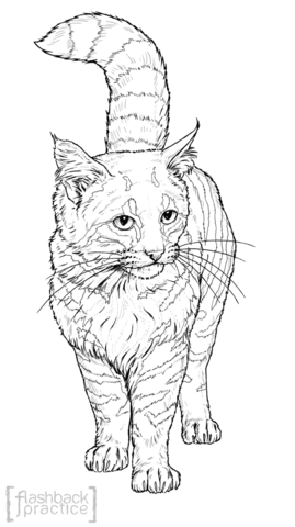 Caracal Kittens And Mother Coloring Page Free Printable Coloring Pages
