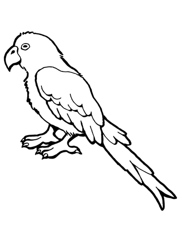 flying parrot coloring page parrot bird coloring page