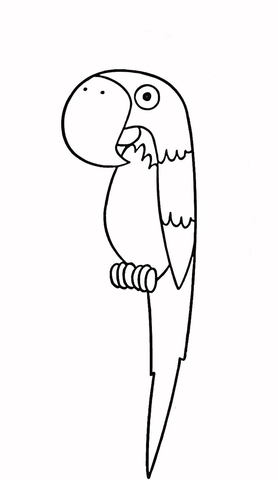 cartoon parrot coloring page parrot coloring page