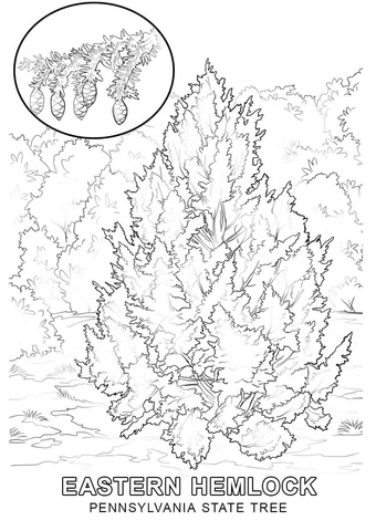 Pennsylvania State Symbols Coloring Page Free Printable Coloring Pages