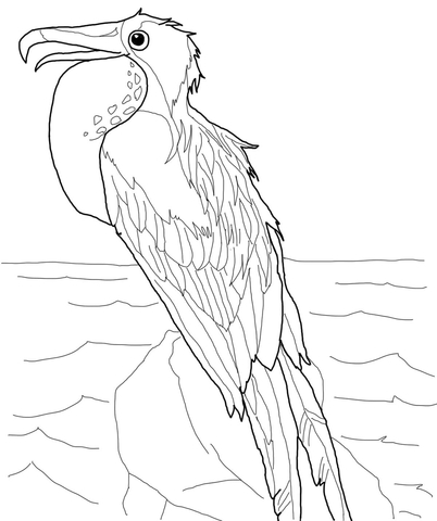 Perched Frigatebird coloring page