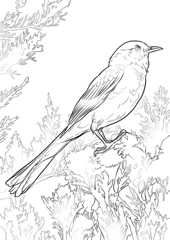Arkansas Mockingbird and Apple Blossom coloring page - Free ...
