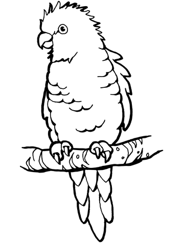 perched parrot coloring page
