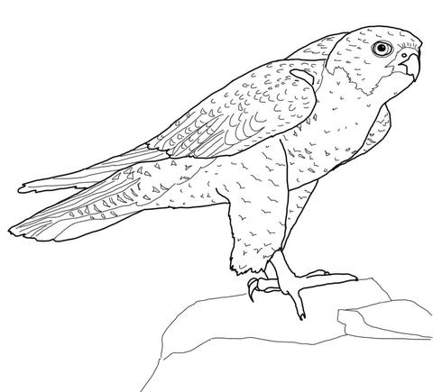 Perched Peregrine Falcon Coloring Page