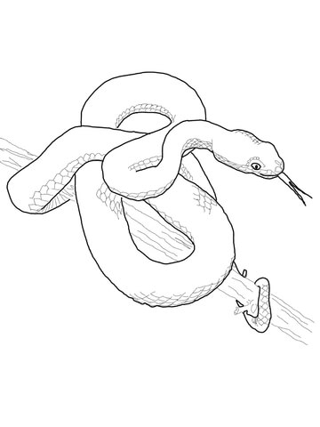 Pit Viper coloring page