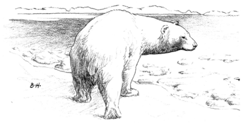Polar Bear Walks On Ice coloring page