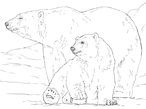 Polar Bear with Baby coloring page
