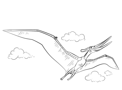 Pteranodon flying coloring page