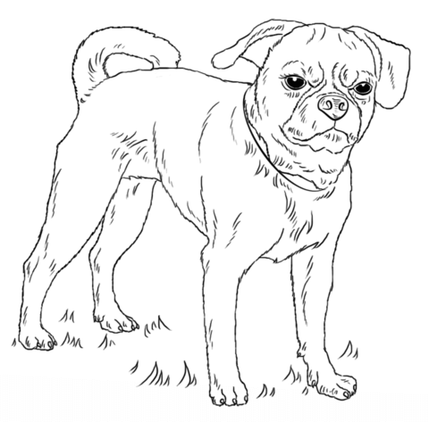 puggle coloring page