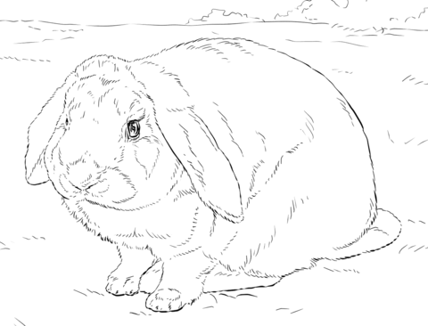 Cute bunny rabbit coloring page - Free Printable Coloring Pages