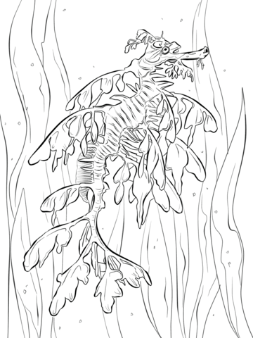 Cute Seahorse coloring page - Free Printable Coloring Pages