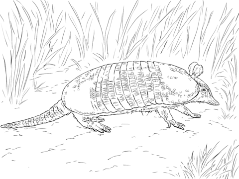 Realistic Nine Banded Armadillo coloring page